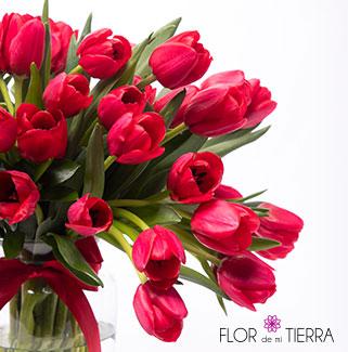 flordemitierra_categorias_right_c
